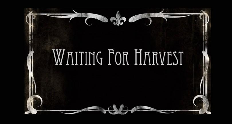 Waiting for Harvest