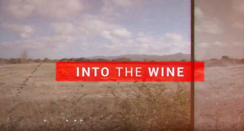 INTO THE WINE. The new project by Podere Sapaio