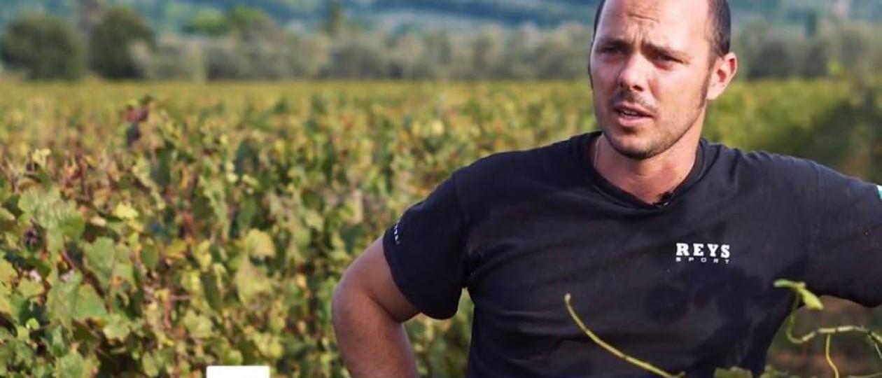 INTO THE WINE: in vigna con Alessandro